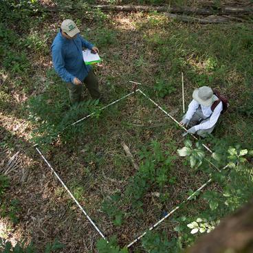 Two people collecting observations of plant growth in a 5 by 5 foot plot