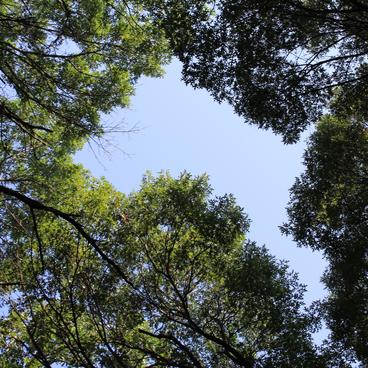 View of forest canopy from below